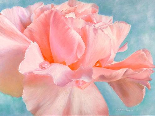 "Pink Carnation - ""Dancing In Love"""