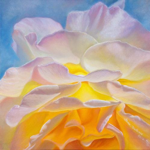 Rose of the Sun