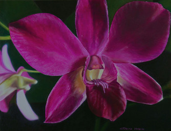 """The Magenta Orchid"" - oil painting"