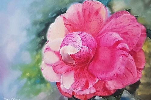 """""""The Sensual Camellia"""""""