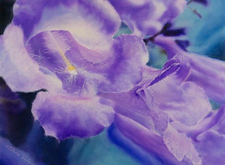 The Jacaranda Flower
