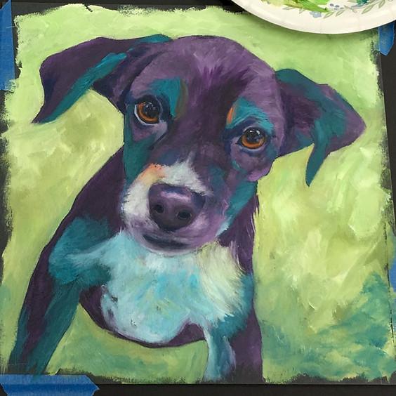 Colorful Pet Portraits  - Session 2