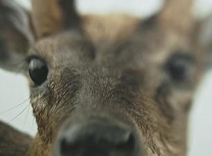 semaine des cinémas étrangers 2020 Animus Animalis