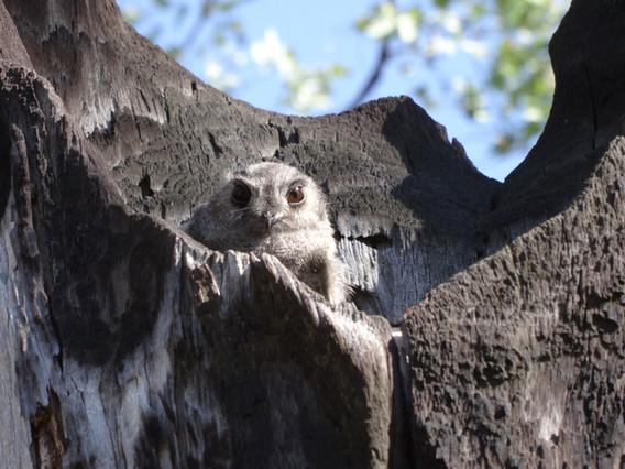 Fauna Surveys