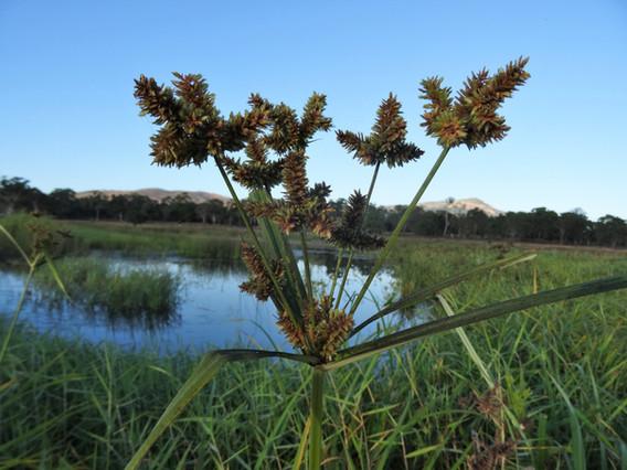 Protected Plant Flora Surveys