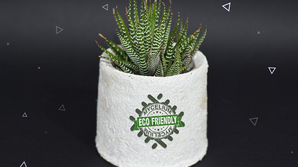 Round Planter Pot