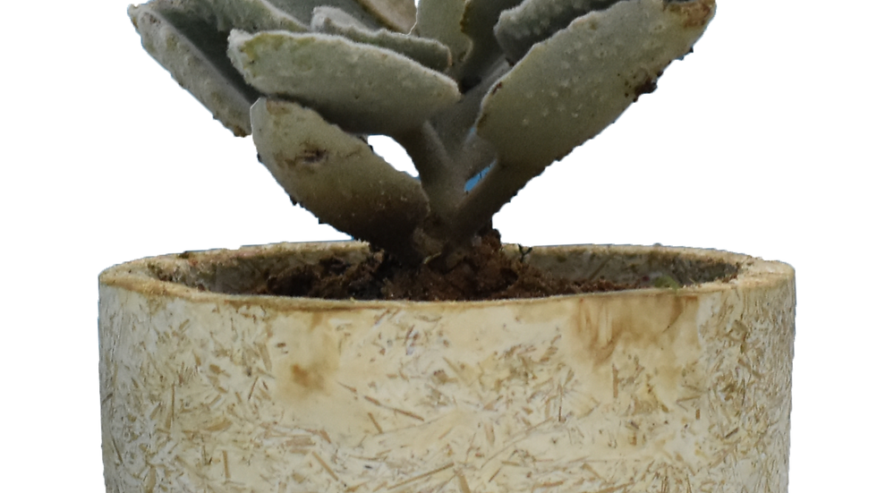 Rounded Natural planter pot