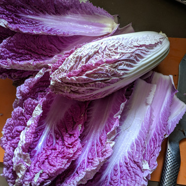 Purple Napa Cabbage