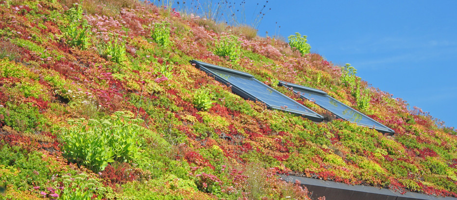 Living Roofs - the only way is up!
