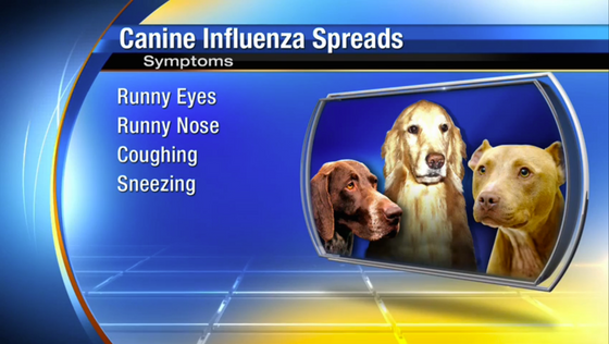 Why Should Dog Owners Care About Canine Influenza?