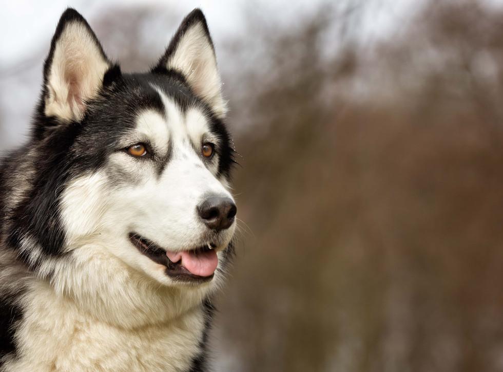 Dogs20150727-24Mikkel.jpg