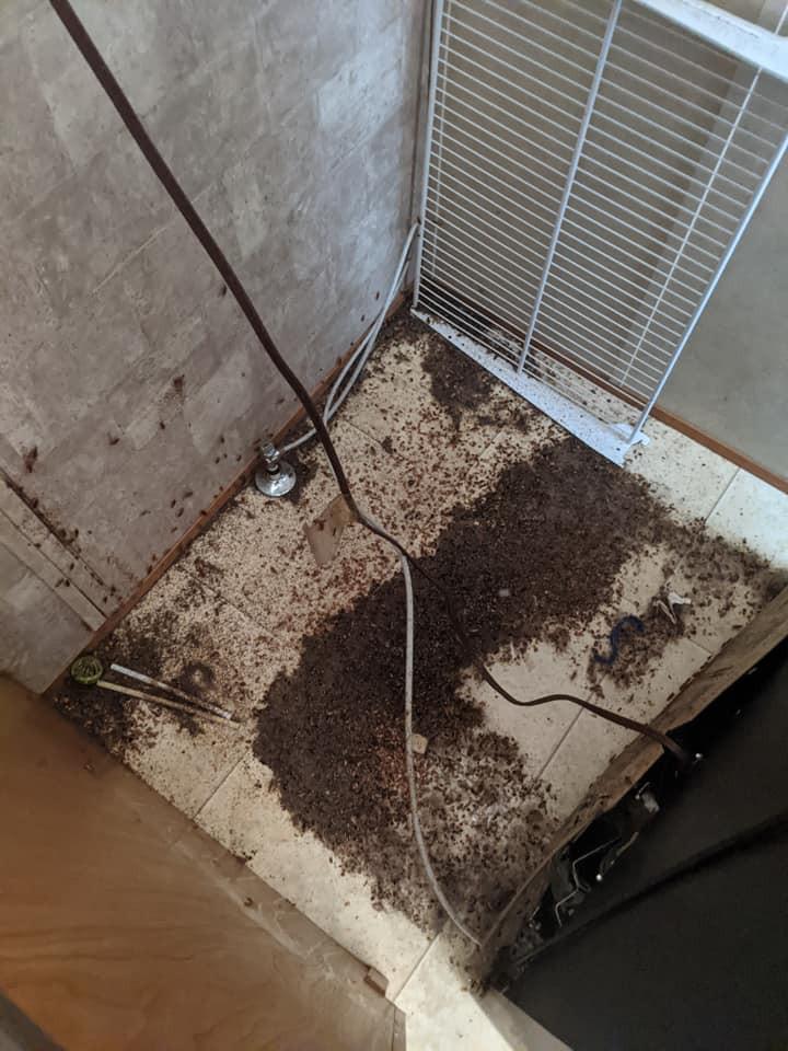 Cockroaches behind fridge