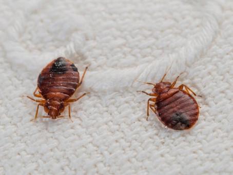 Sleep Tight! (AKA: No way will I get bed bugs!)