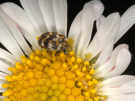 Springing into Pest Season (AKA: What's bugging you now?)