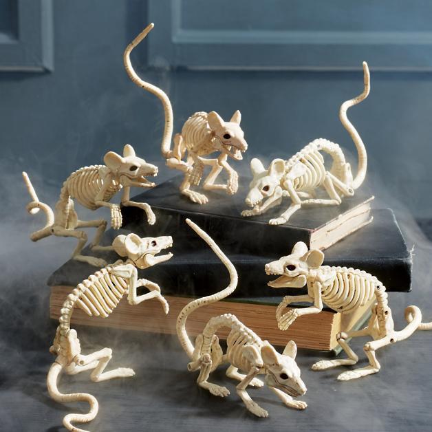 Rodent skeleton.