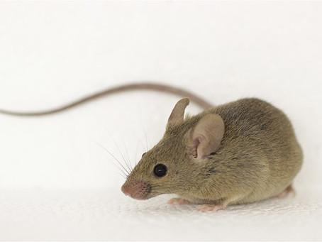 Three Blind Mice (AKA: I'm running away)