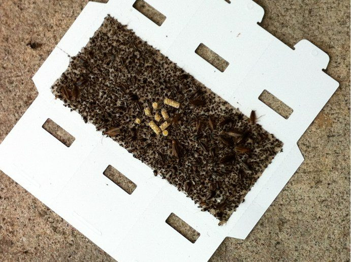 Insect covered trap