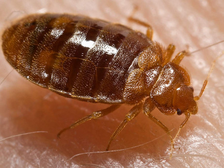 Down the rabbit hole (AKA: Does Wonderland have bed bugs?)