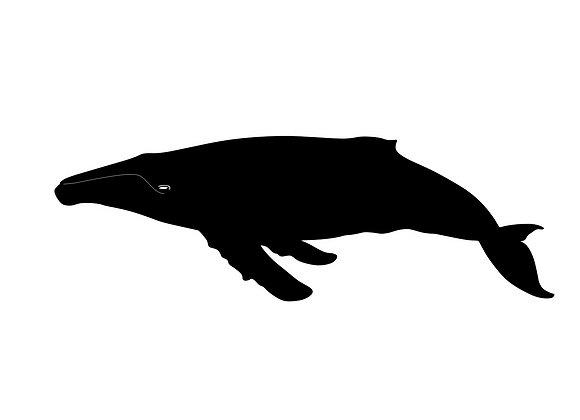 Baleine Luxe