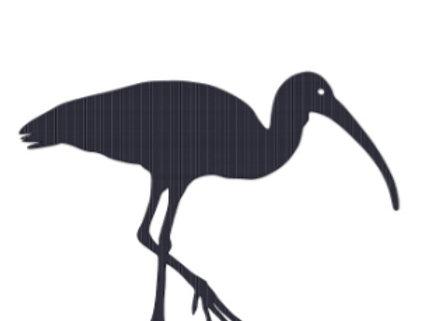 Petit oiseau (Ibis)