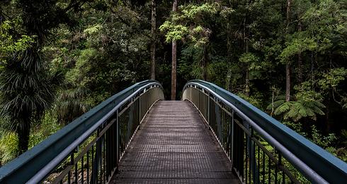 Whangarei%20Falls%20footbridge_edited.png