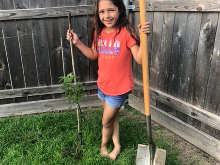 Plant Your Tree.