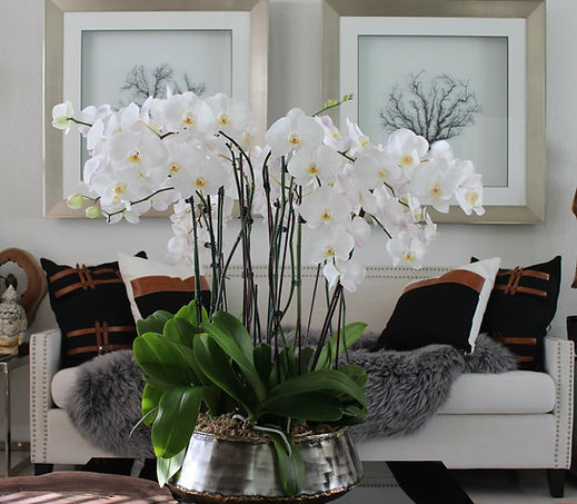 white-orchids-in-bengal-bowl.jpg