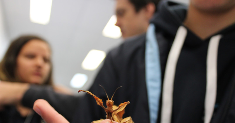 IMG_0850 leaf insect.JPG