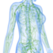 Lymphatic system map, lymphatic massage