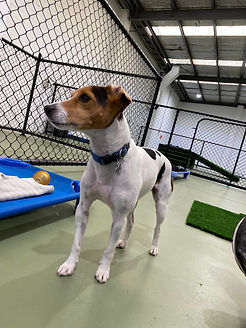 Playful Pups Doggy Daycare Grooming