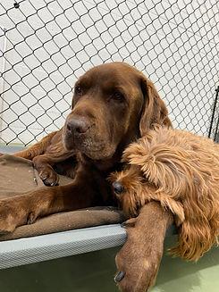 Playful Pups Doggy Daycare Sleep Overs