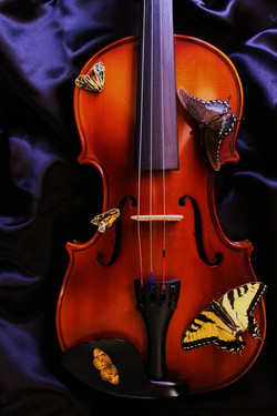 Violin with Butterflies