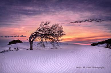 Purple Sunset (Western Australia)