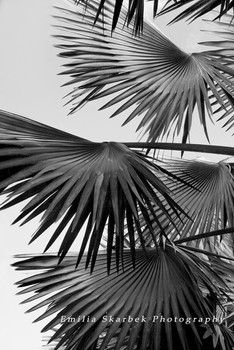 """Palm Leaves"""