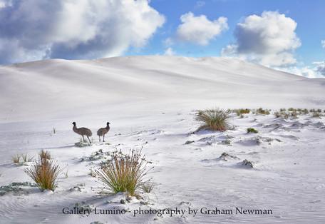 Two Emus (Western Australia)
