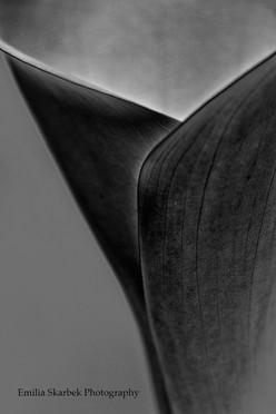 """Black Lily"""