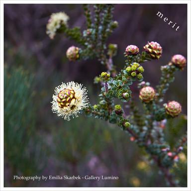 Beauty of Stirling Ranges, Western Australia