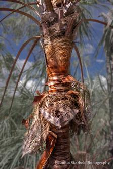 Palm Tree (Northern Territory)