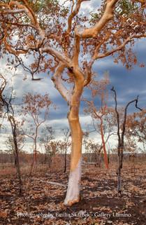 After Bushfire (Australia)