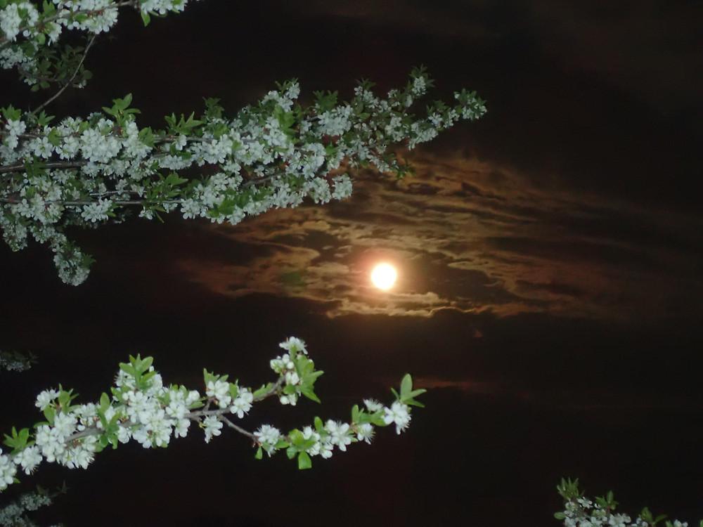 conte pleine lune cheval pacte homme