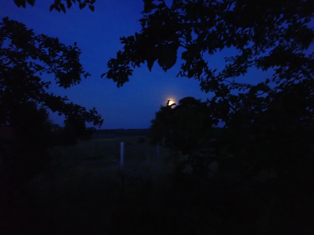 Conte lune cerf
