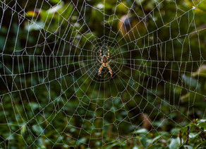 Message d'une araignée