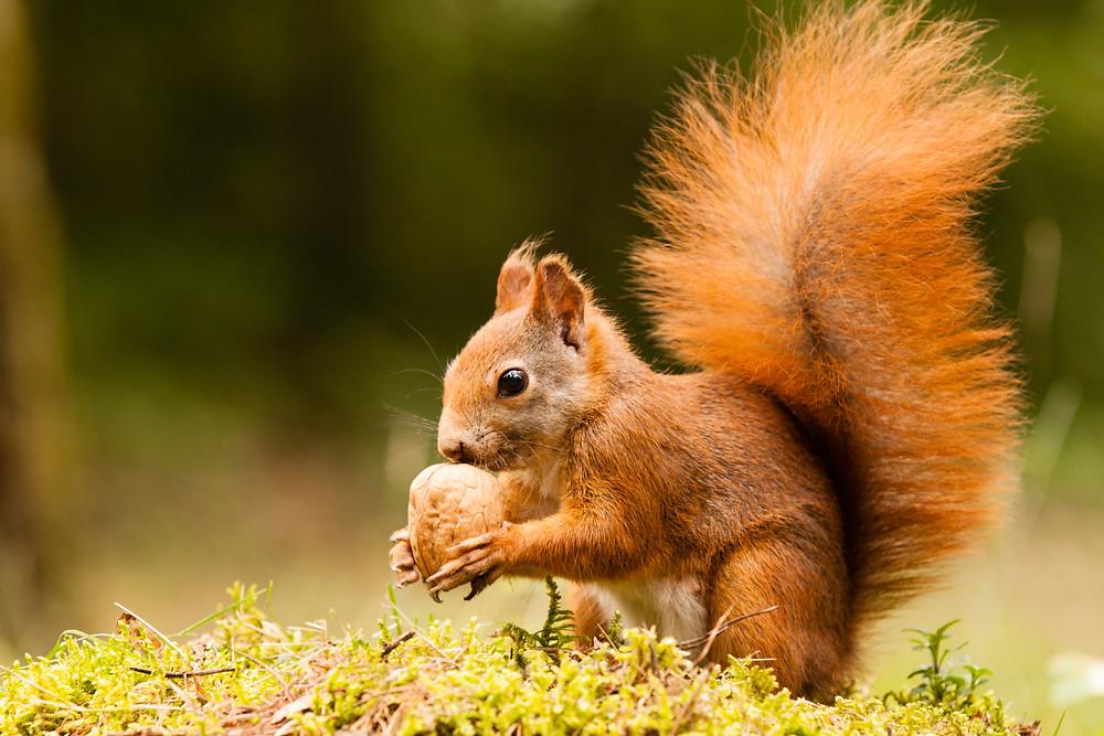 écureuil mission sacrée