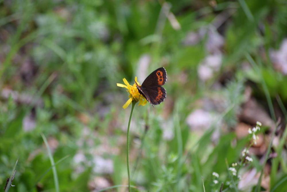 Papillon marcher sa vision planète indigo