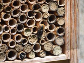 Message des abeilles sauvages