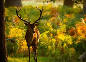 Conte du cerf, gardien de la forêt