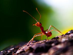Conte de la fourmi