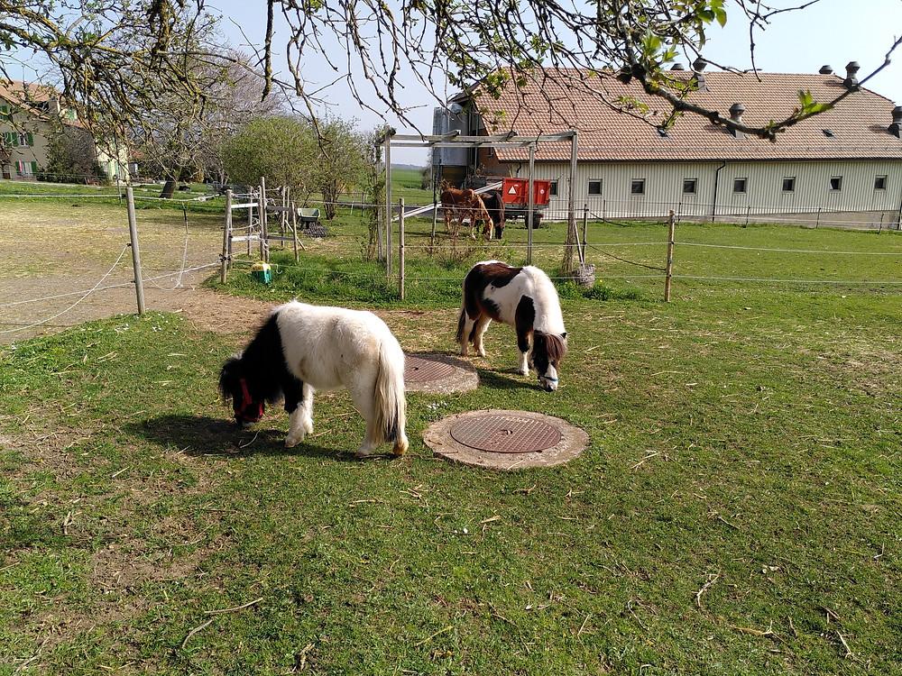 Stella et Bianca, Planète Indigo
