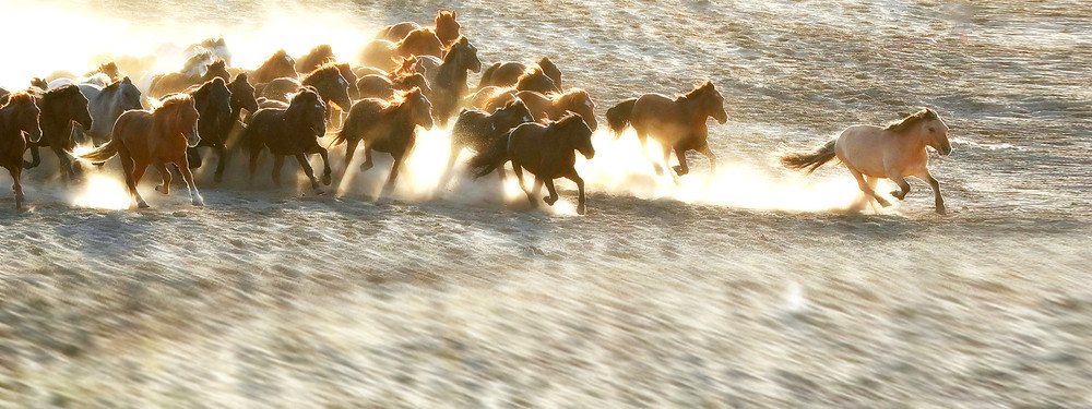 conte chevaux liberté pacte hommes