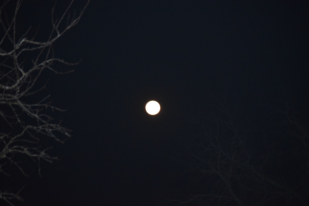 lune conte louve